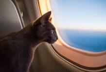 gatto in aereo