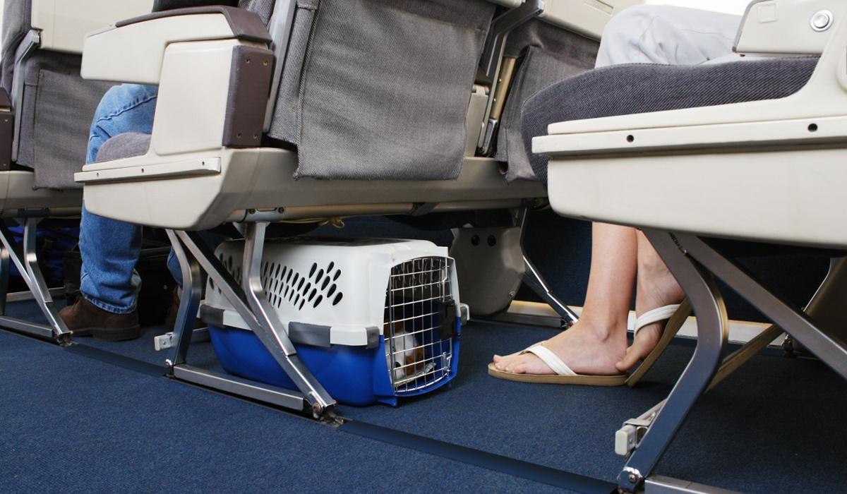 trasportino sotto il sedile dell'aereo