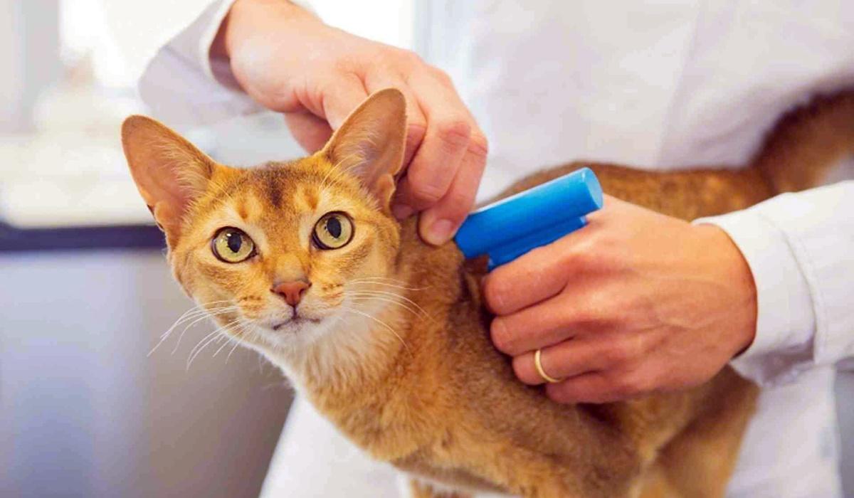 gatto con il microchip