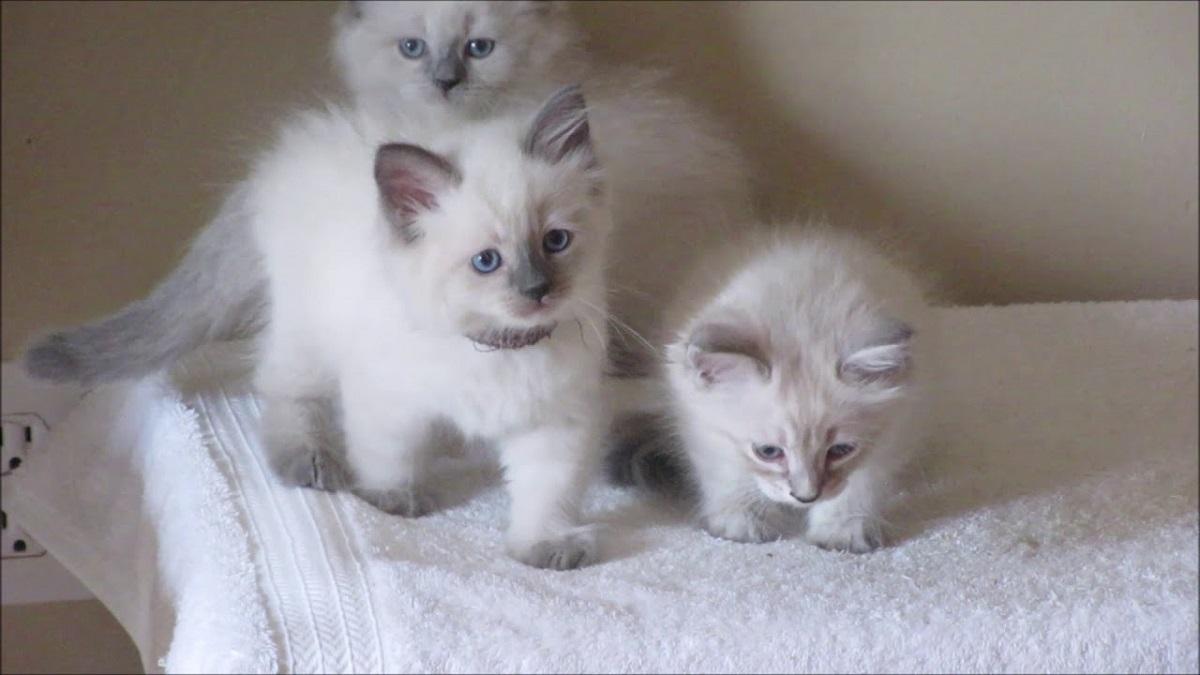 3 gattini sul letto