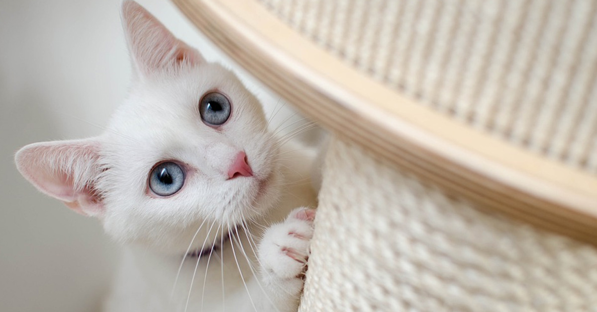 gattino vuole giocare