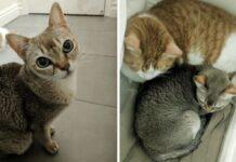 danny sandy due gatti perdono casa trovano amore