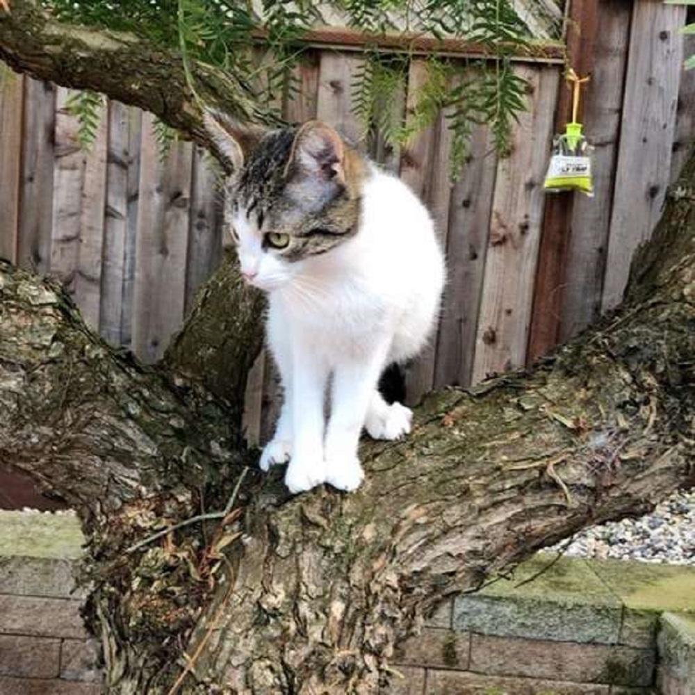 dash gatta amore verso alberi