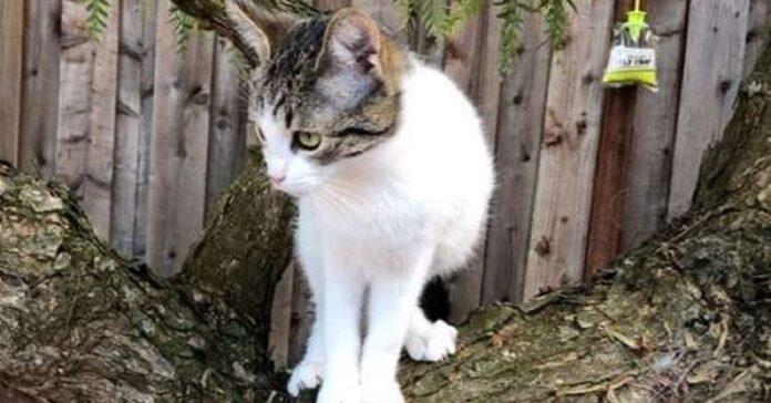 dash la gattina con una zampa piegata viene adottata