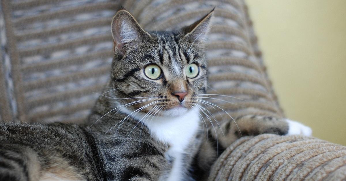 gatto preoccupato