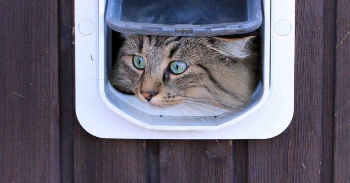 gatto in esplorazione