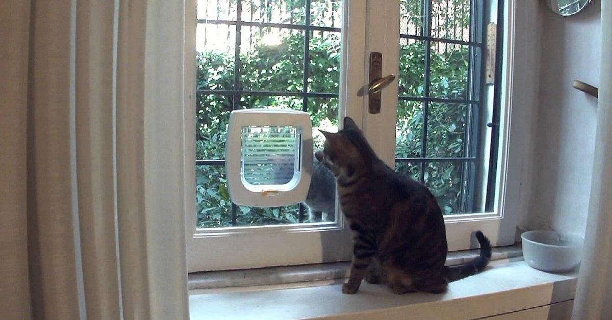 gattaiola per gatto alla finestra
