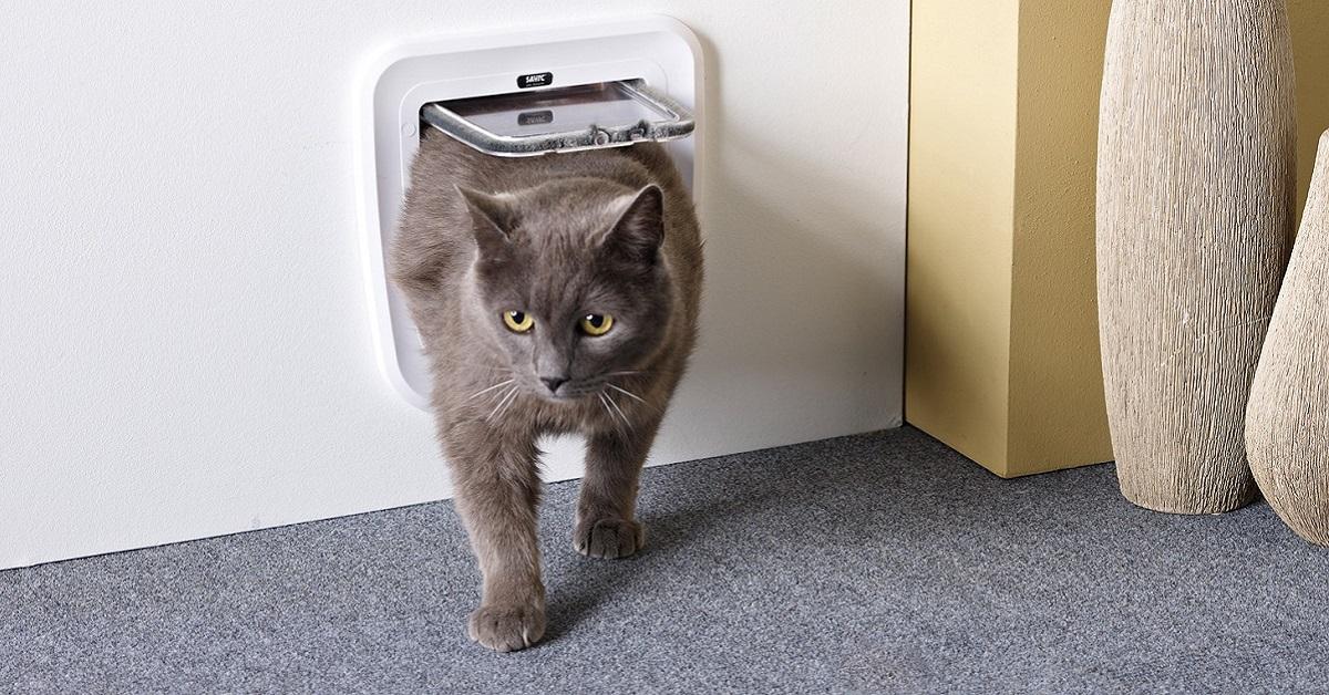 gatto grigio torna a casa