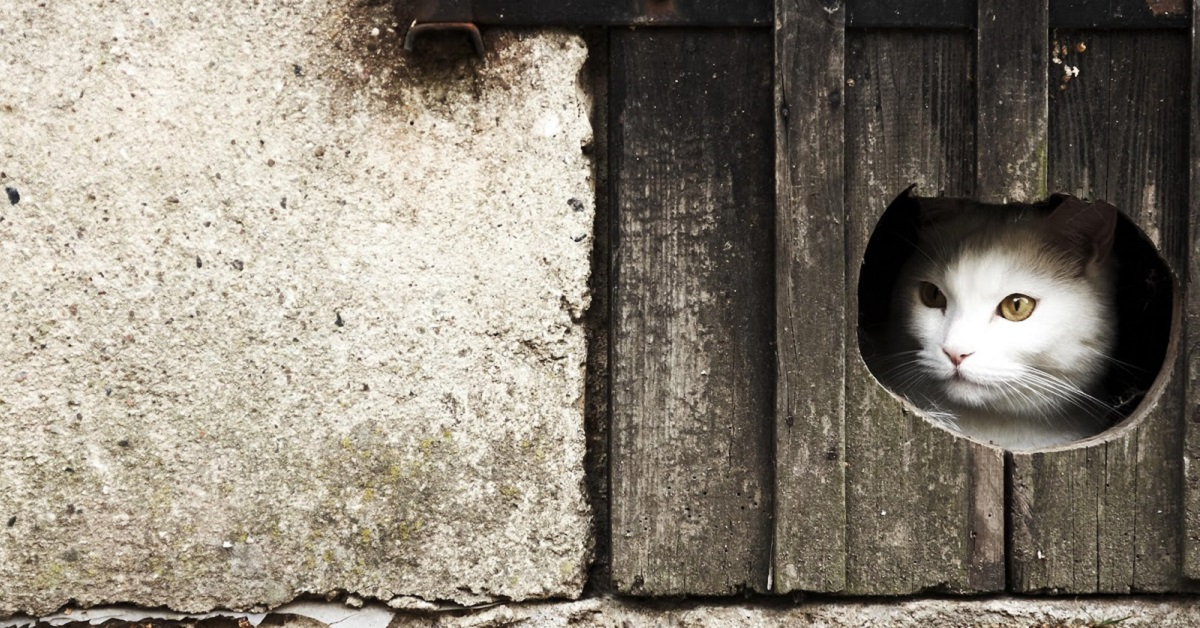 apertura sulla porta per il gatto