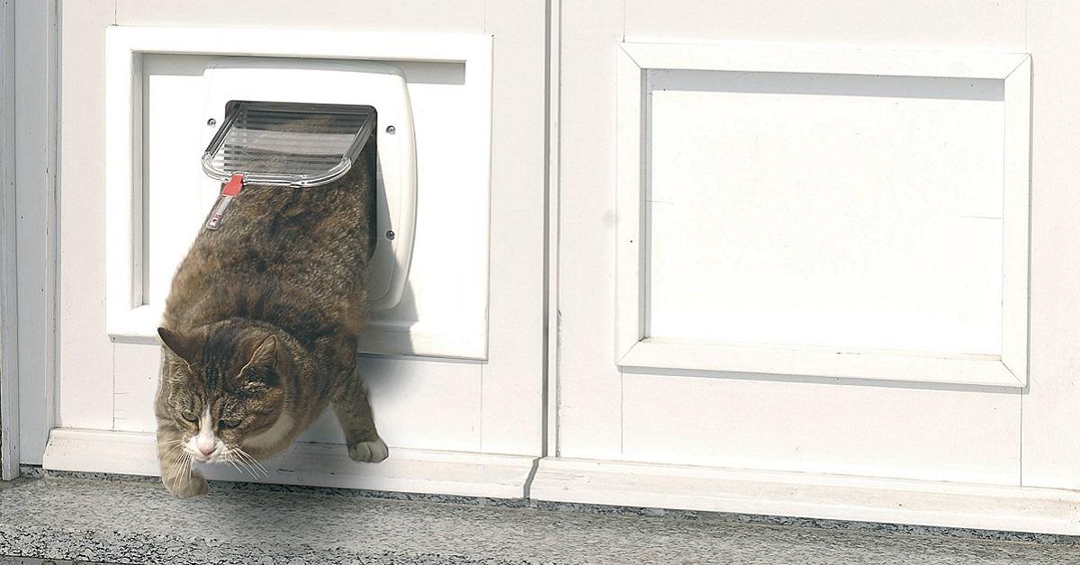 gatto e gattaiola scomoda