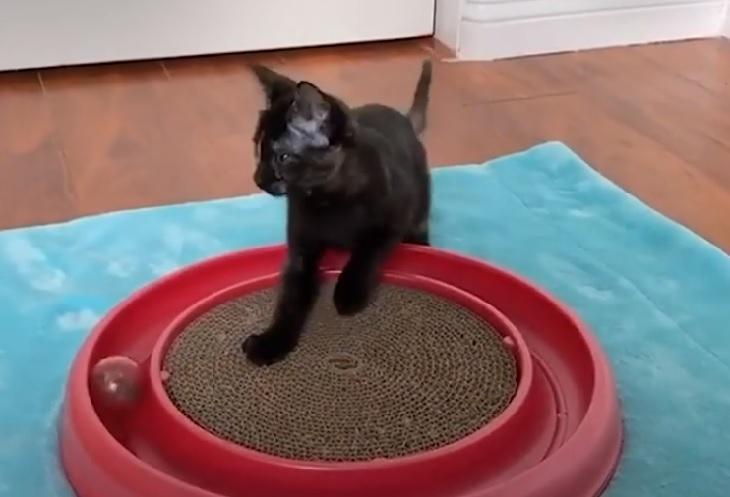 erica junior gatta nuova avventura