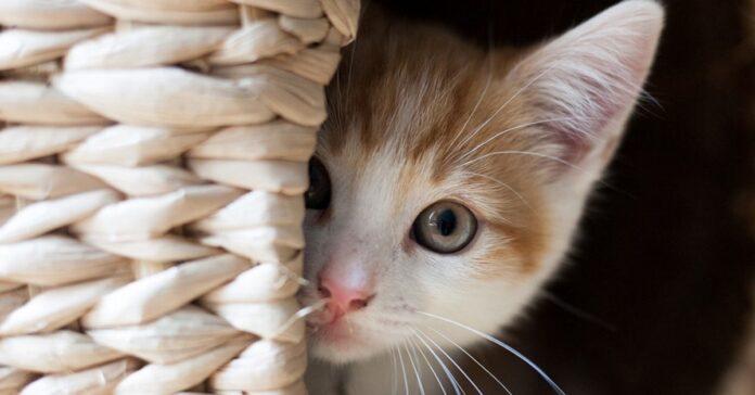 gatto misterioso