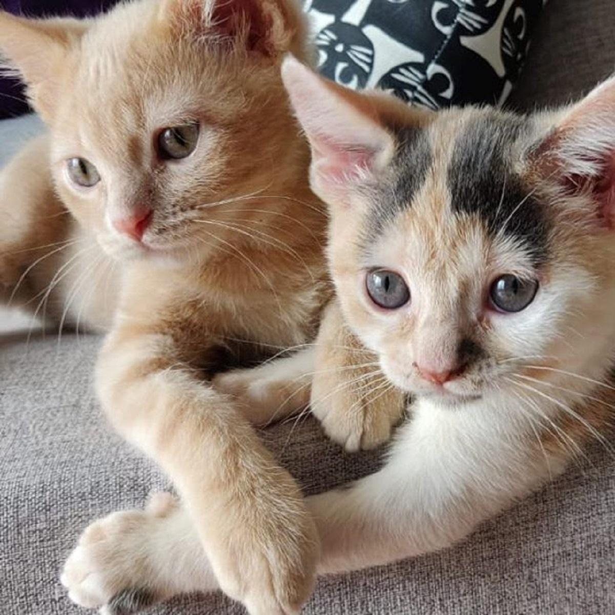 fuller fae gatti coppia meravigliosa