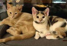 fuller fae due gattini salvati dalla disperazione vengono adottati