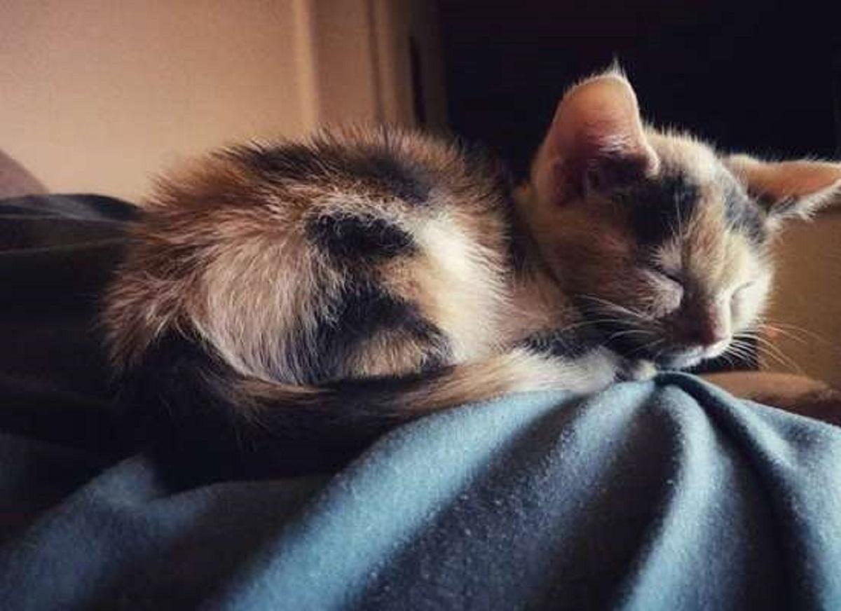 fuller gattino adora dormire letto