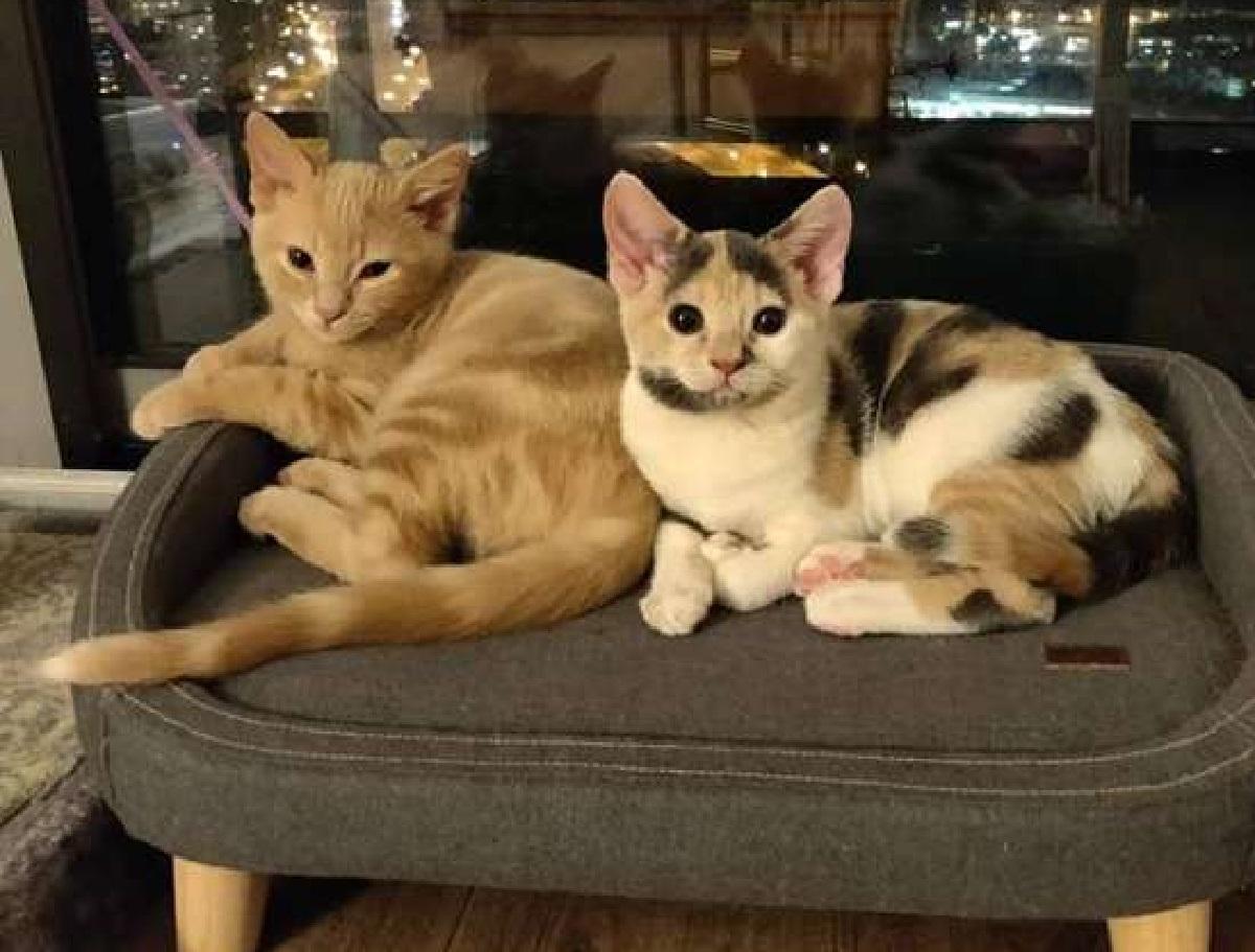 fuller fae gatti felici della nuova vita