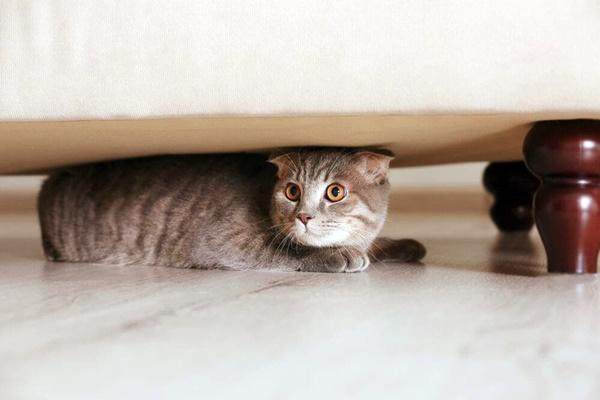gatto nascosto sotto al letto