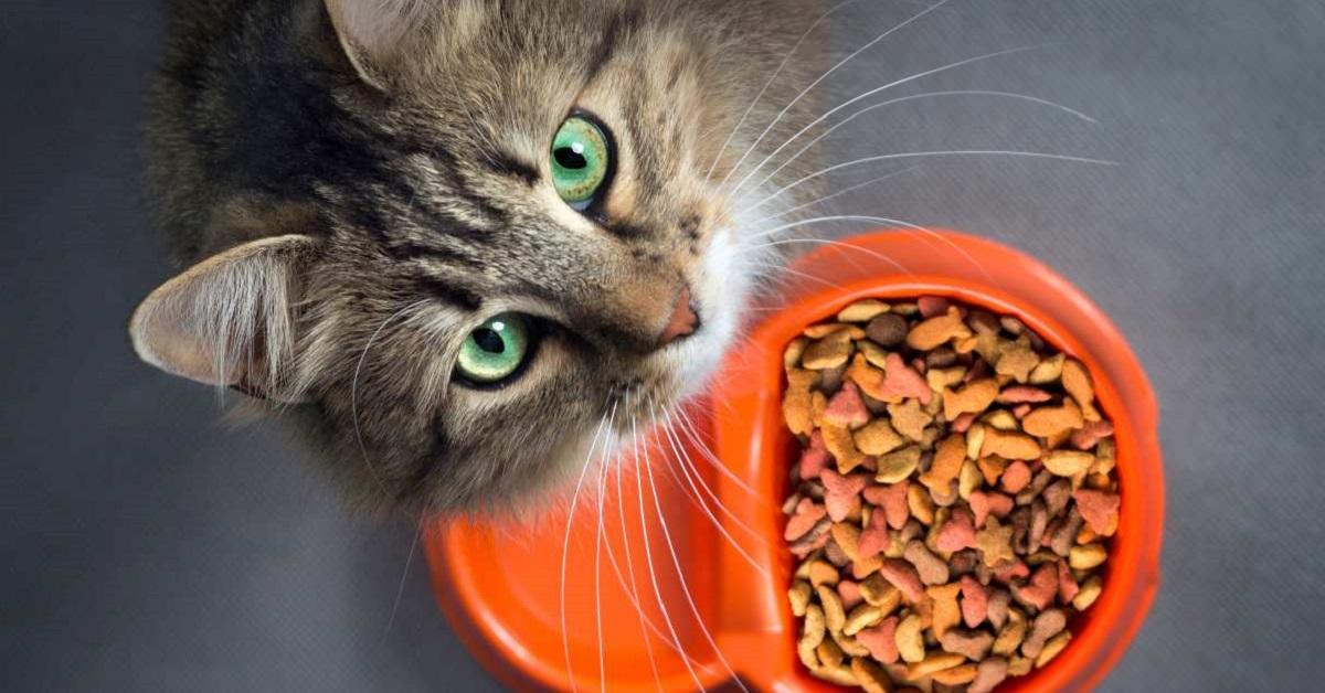 gatti e croccantini