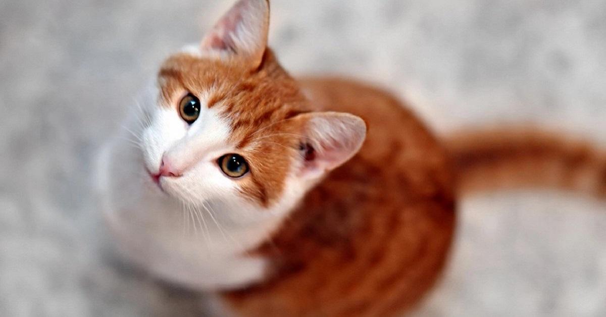 gatto in attesa