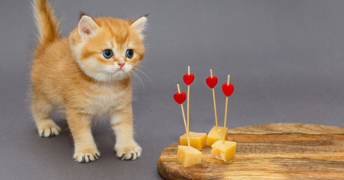 gatto goloso di formaggio