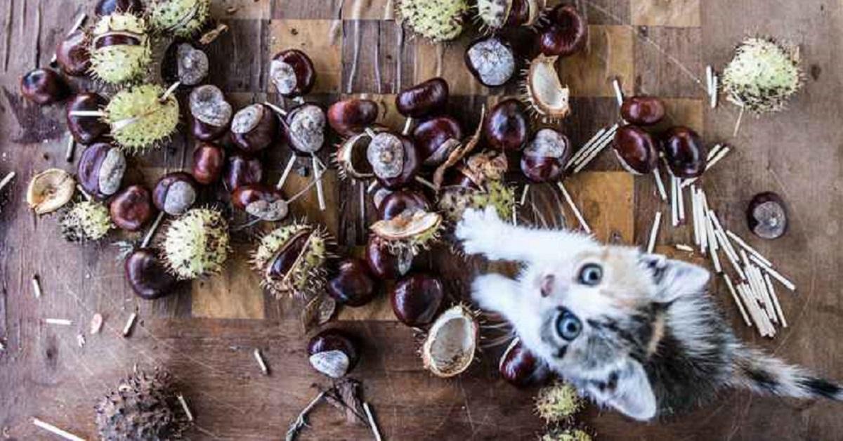 gattino e castagne