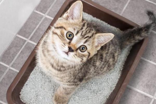 gattino dentro la lettiera