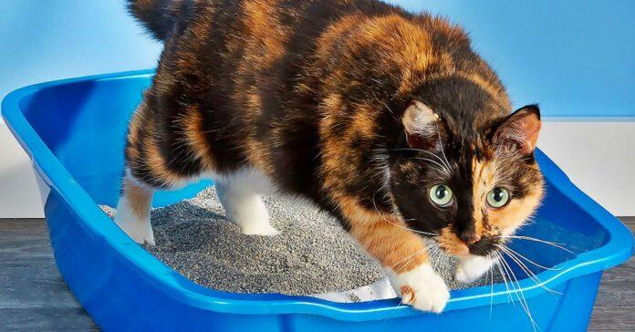gatto fa i bisogni nella lettiera