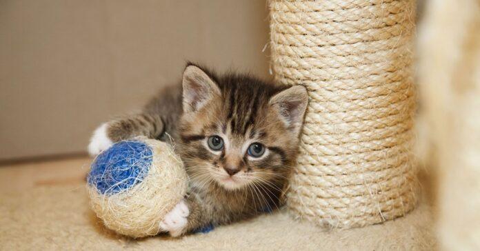 giocattoli per gattini