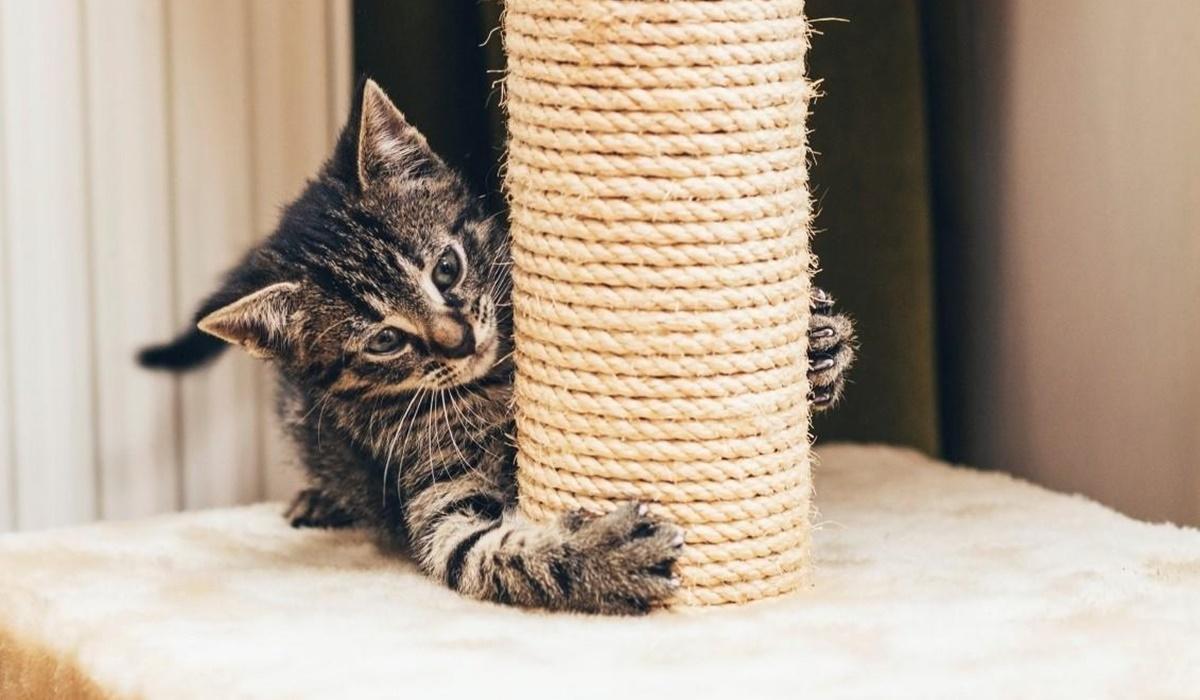 gattino si fa le unghie sul tiragraffi