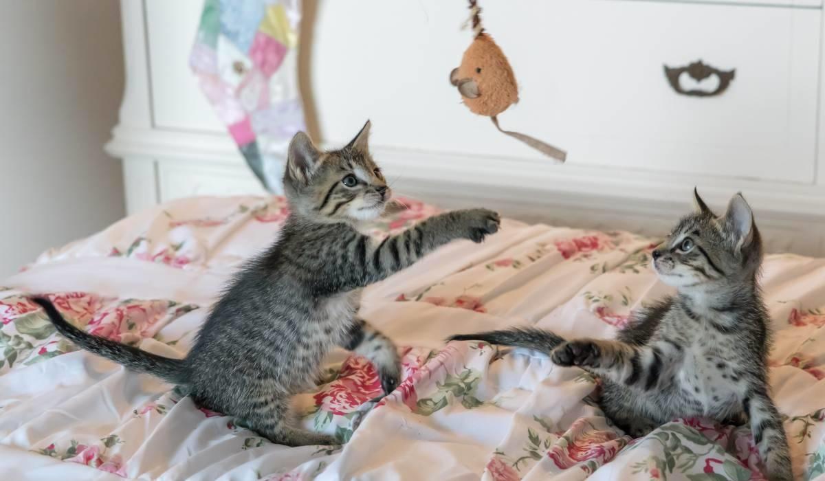 gattini che giocano insieme