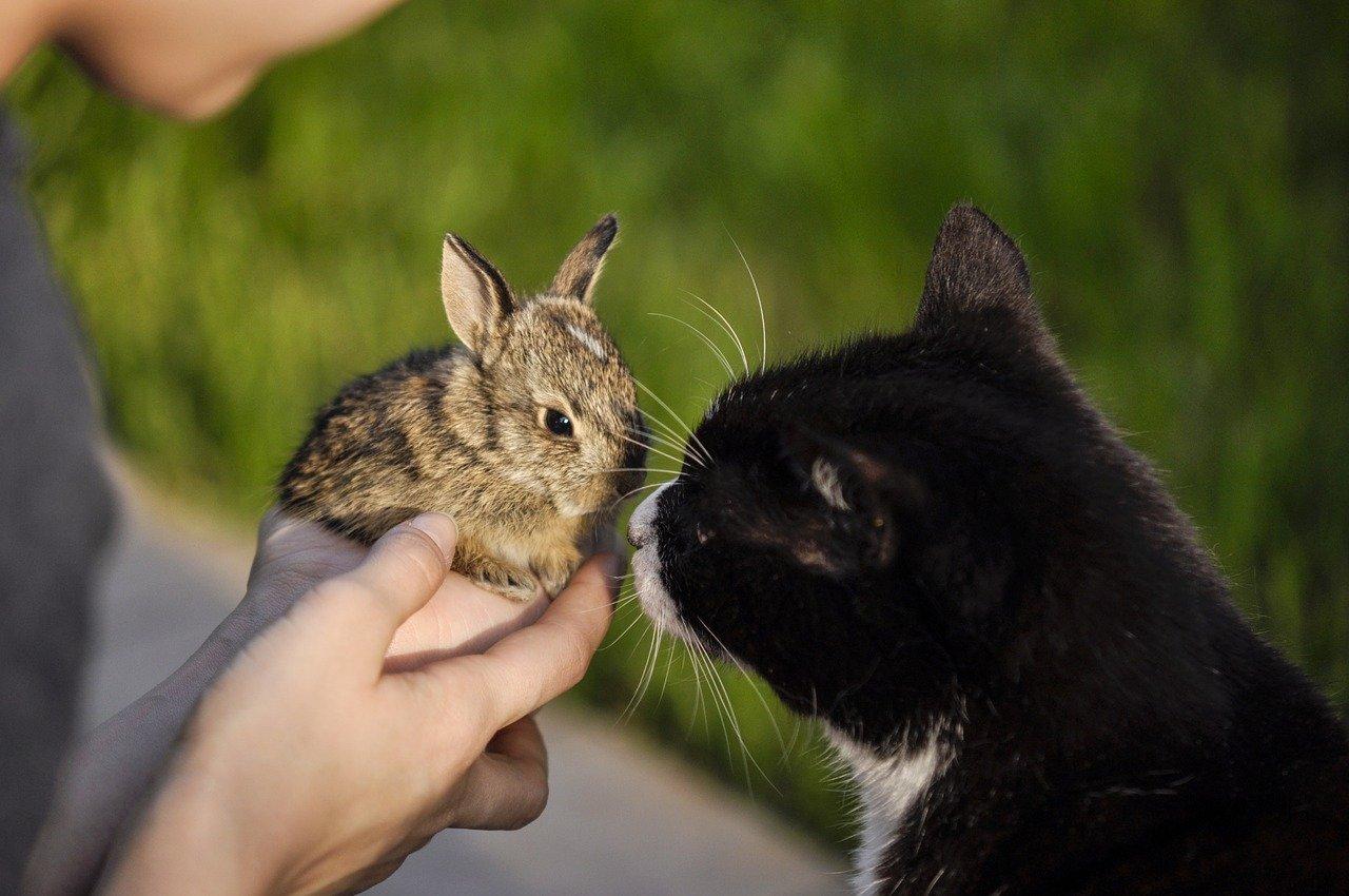 gattino annusa coniglietto