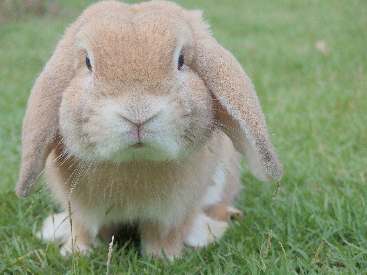 coniglietto sguardo dolce