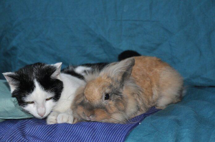 gatto e coniglio insieme rilassati