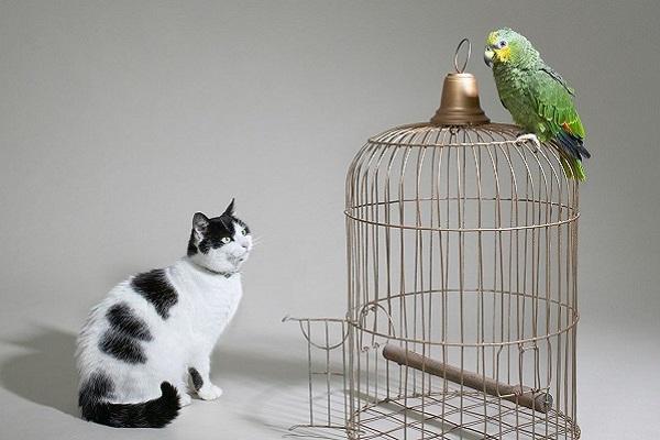 gatto guarda pappagallo