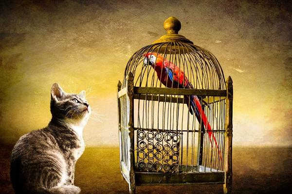 gatto tigrato e pappagallo rosso