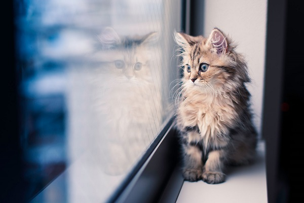 gattino a pelo lungo sul davanzale