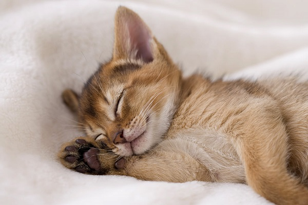 gattino arancione dorme beato