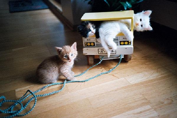 3 gattini giocano in casa