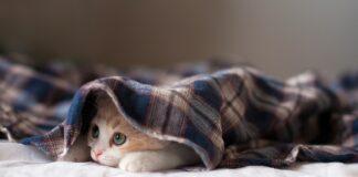 gattino sotto coperta