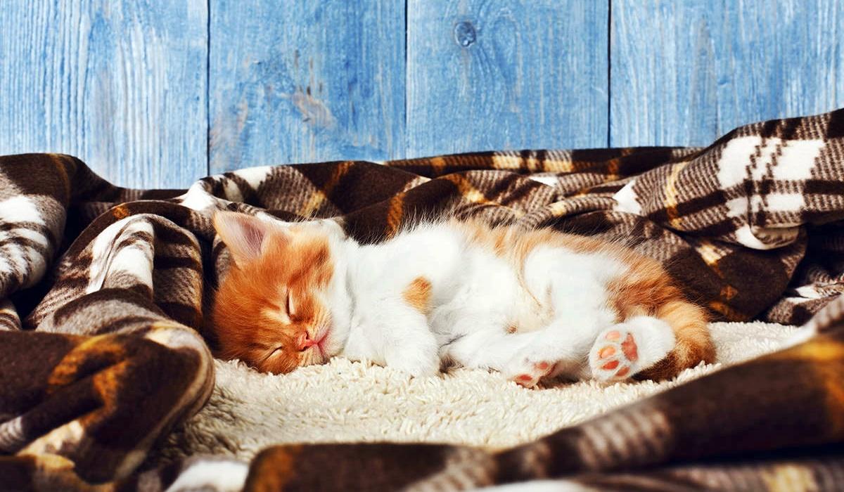 gattino bianco e arancione nella cuccia