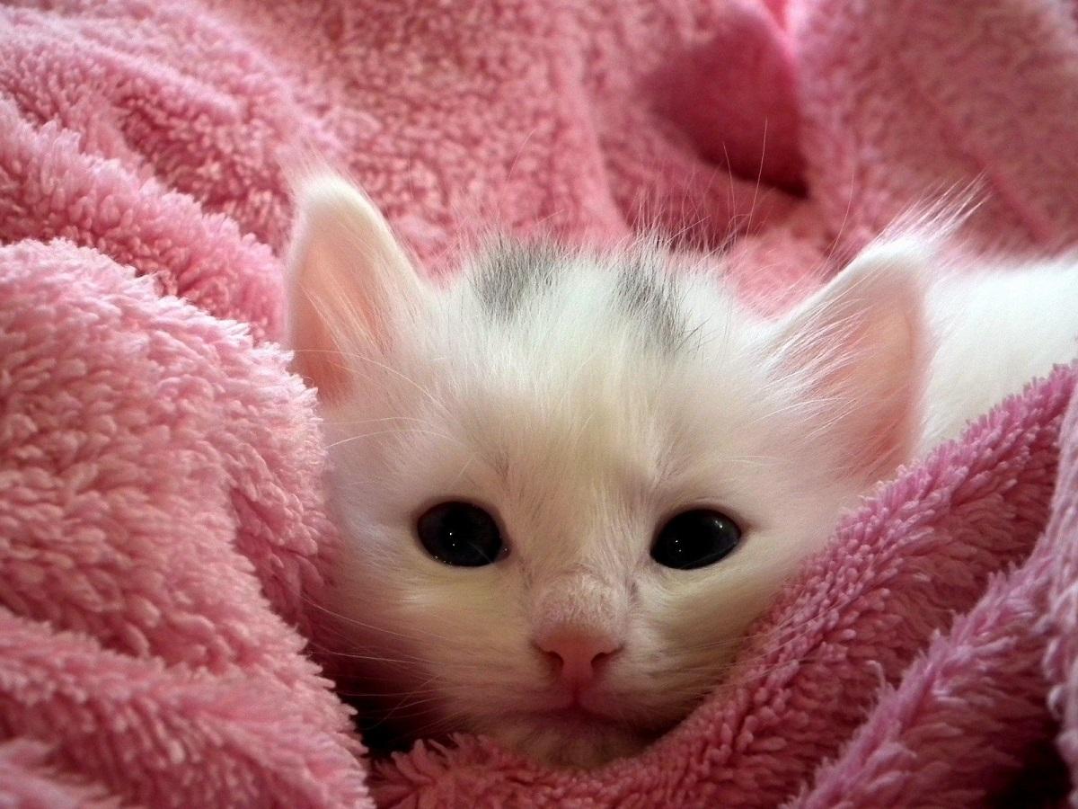 gattino avvolto in una coperta