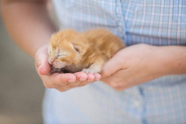 gattino arancione molto piccolo