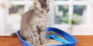 gattino quanto spesso fa la pipì