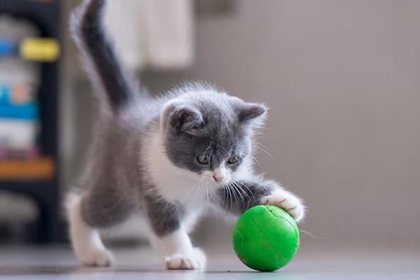 gattino che gioca con una pallina verde