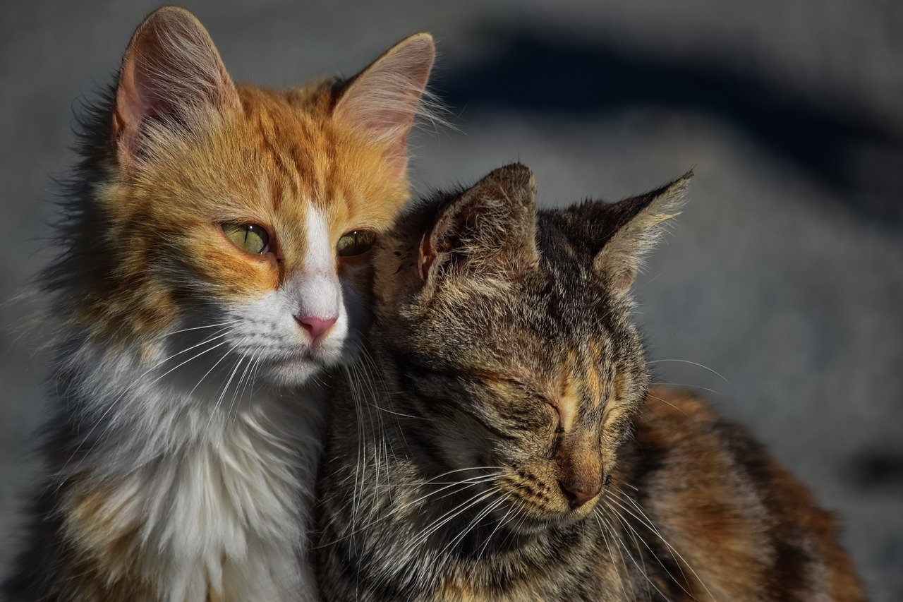 gatti si vogliono bene