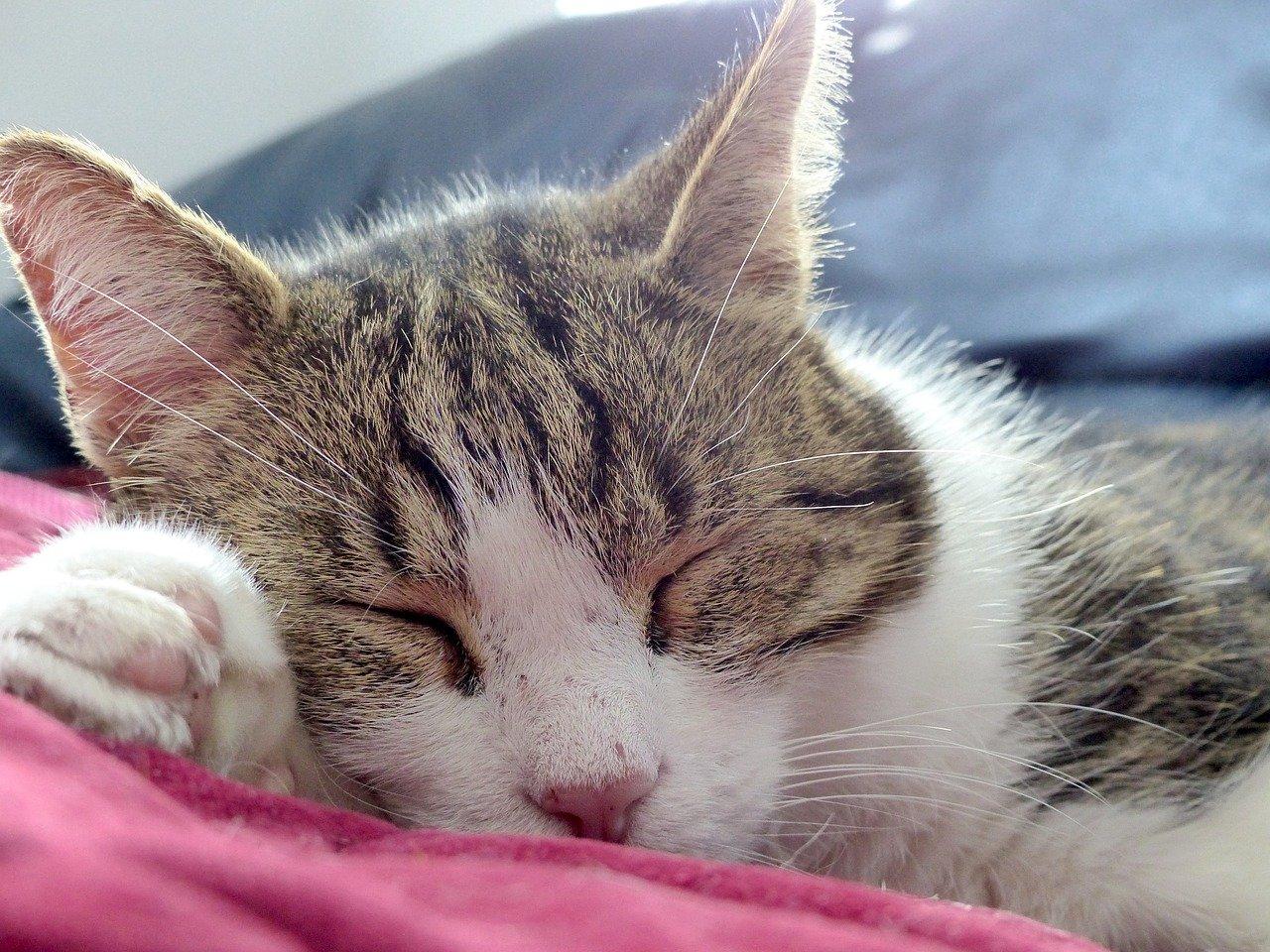 gatto anziano che si rilassa