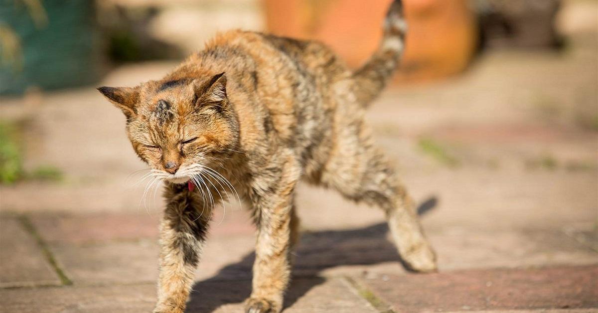 gatto anziano che sta male