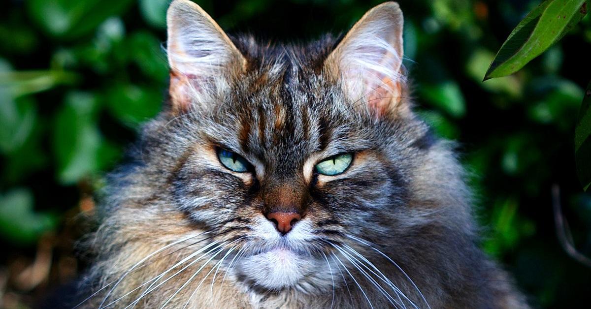 gatto serio