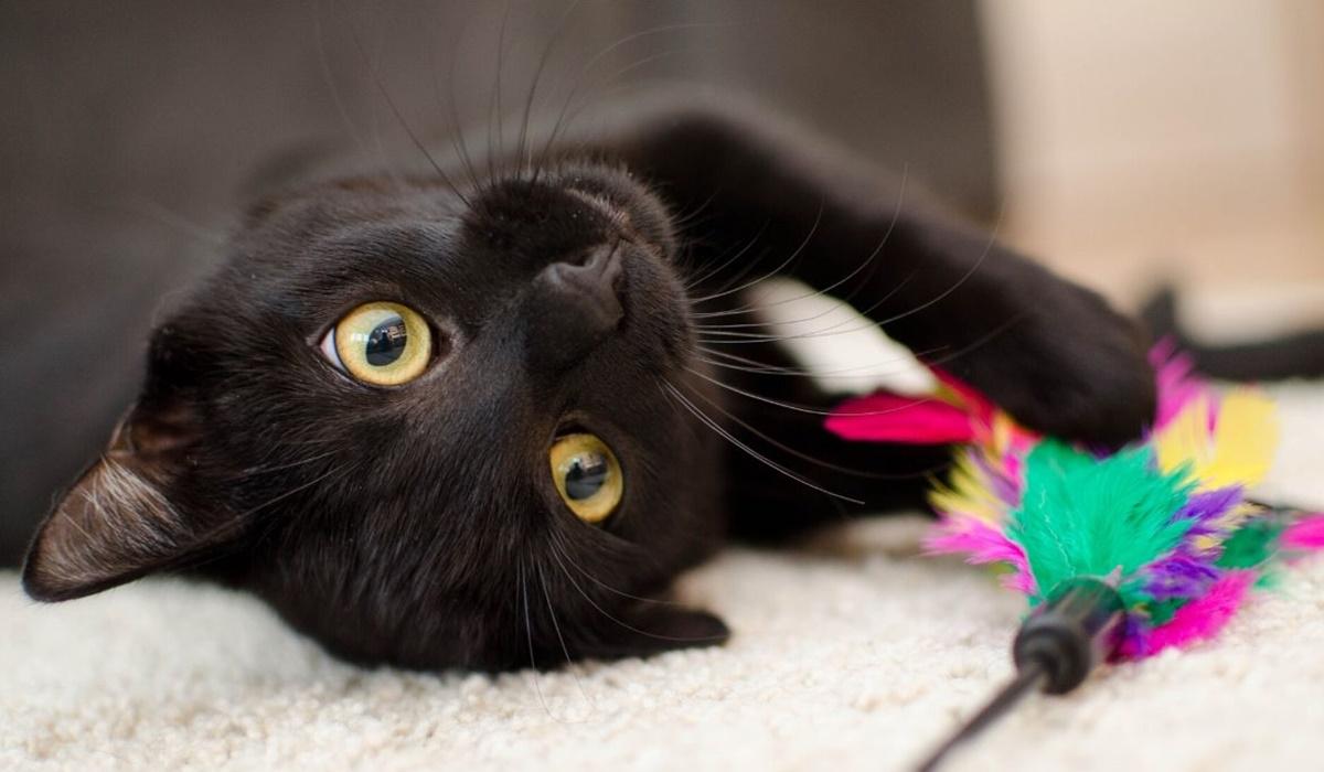 gatto nero sdraiato sulla schiena