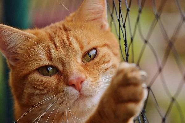 gatto davanti a rete